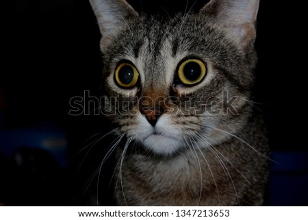 Big eyed cat #1347213653