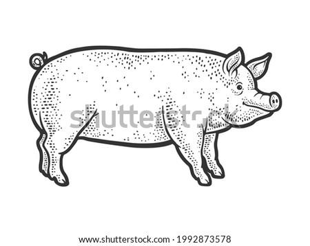 Big fat piglet pig line art sketch engraving raster illustration. T-shirt apparel print design. Scratch board imitation. Black and white hand drawn image.