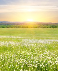 Big field of flowers on sunrise in mountain valley.The beautiful variety of flowers on the green meadow grass illuminated by the sunlight.A Sunny spring day in the mountains at sunrise.