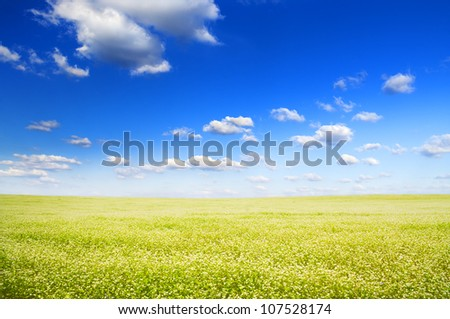 Big field of flowers under blue sky. Composition of nature