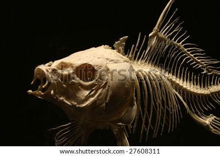 Big fish skeleton