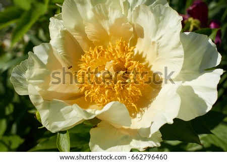 Big flower with white petals and a yellow center closeup ez canvas big flower with white petals and a yellow center closeup mightylinksfo