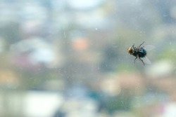 Big fly sitting on the dirty window