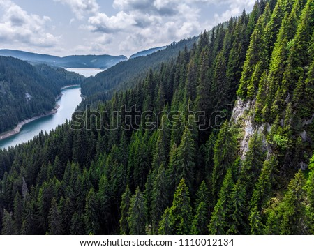 Photo of  Big forest in Siberia Taiga. Summer forest. taiga siberia russia.  Landscape with forest mountains. Altai, Siberia. High fir on the slopes of the Altai mountains. The harsh Russian landscape. Top view