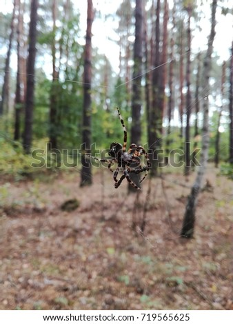 Big forest spider. Insect - Shutterstock ID 719565625