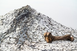 Big gnawed animal bone near a mud volcano
