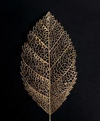 Big Golden leaf on black background