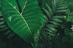 big green leave natural dew