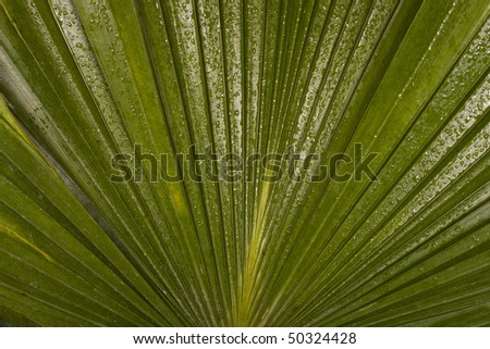 big green leave with waterdrop background