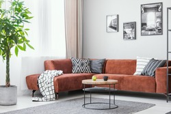 Big green plant, small round coffee table and corner sofa in elegant living room interior
