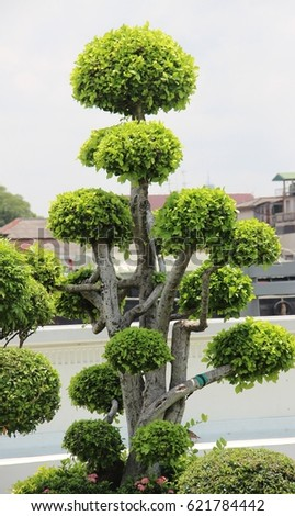 Big green tree beautiful #621784442