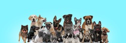 big group of happy looking cats and dogs resting together on blue background