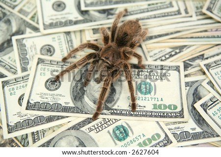 1 dollar bill spider. one dollar bill owl.