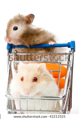 Big hamster is making shopping with little hamster isolated on white