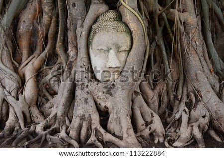 Big head buddha at tree in Wat Mahatrat temple in Ayuttaya historical park , Middle of Thailand