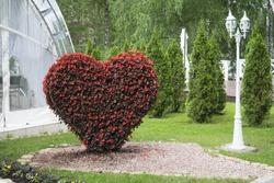Big Heart (topiary figure) of fresh flowers