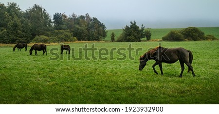 Big herd of bay horses grazing grass on meadow pasture in wild Beskid Niski mountains area. Cloudy sky. Zdjęcia stock ©