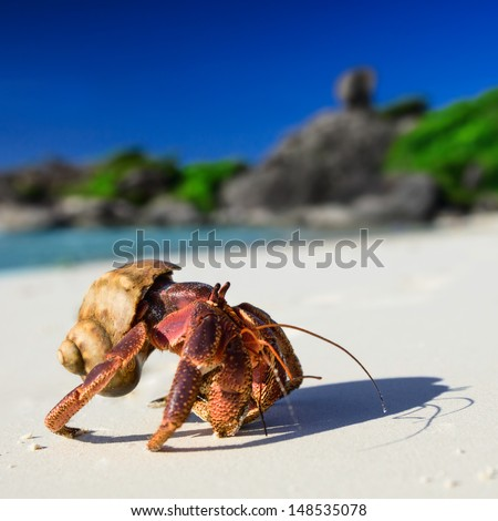 Big hermit crab on the tropical island