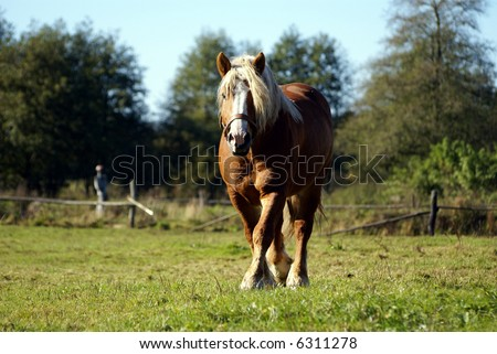 Big Horse front view on grenn grass - stock photo