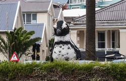 Big inflated sculpture of african penguin in Simon's Town by Boulders Beach