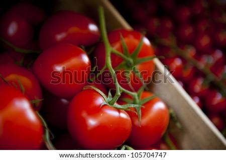 Big, juicy tomatoes on a vine.