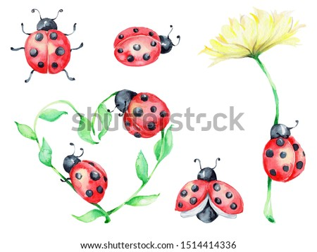 Big ladybug set, green and yellow flowers; watercolor hand draw illustration; with white isolated background Сток-фото ©