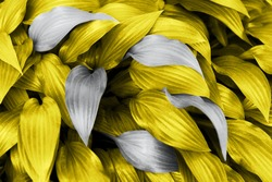 Big leaf closeup in yellow-gray color 2021, bright nature as background for design