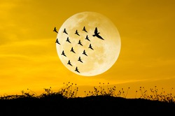 Big moon and birds silhouettes background sun set. Leadership Concep
