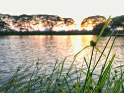 Big natural pond in a park with sunset color reflect on it's surface surrounding with green leaves of grass and blur tree in evening time