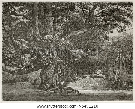 Big oak know as Le Charlemagne in Fontainebleau forest, France. Created by Desjobert, published on Le Tour du Monde, Paris, 1867