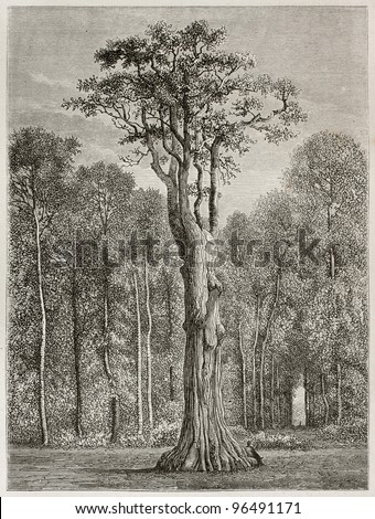 Big oak know as Pharamond in Fontainebleau forest, France. Created by Desjobert, published on Le Tour du Monde, Paris, 1867 - stock photo