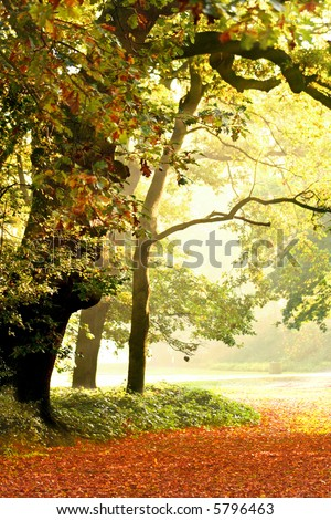Big oak trees in a beautiful misty autumn park. - stock photo