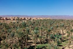 Big oasis with palm trees between Sahara desert and Atlas Mountains, Morocco