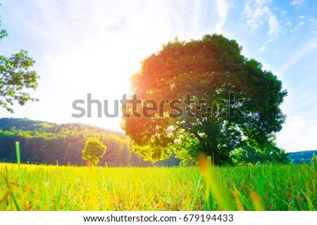 Shutterstock Big old oak tree in the middle of a green field