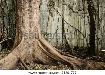 Big old tree - stock photo