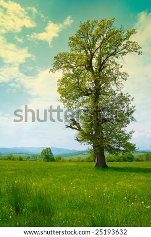 Big old tree in a green spring meadow - Shutterstock ID 25193632