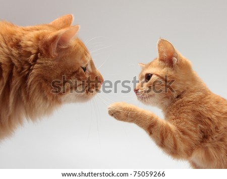 Big orange cat and a little orange kitten