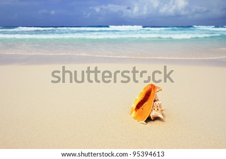 Big orange shell on the sandy beach, Seychelles, La Digue