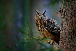 Big owl in forest habitat, sitting on old tree trunk. Eurasian Eagle Owl with big orange eyes, Germany. Bird in autumn wood, beautiful sun light between the trees. Wildlife scene from nature.