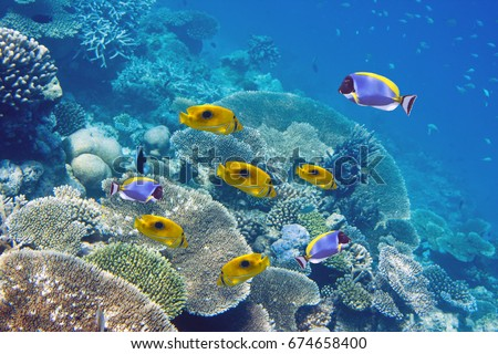 Big pack of tropical fishes over a coral reef #674658400