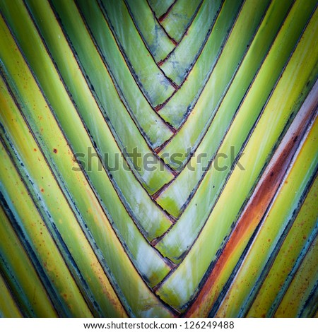 Big palm folding branches abstract closeup