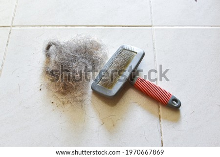 Big pile of dog hair and which brush to comb out the dog on floor, Bunch of dog hair after grooming, Shedding tool, Hair combed from the dog with brush, top view