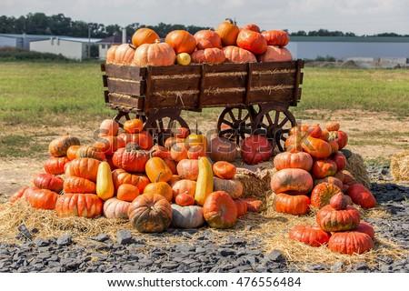big pile of pumpkins on hay in...