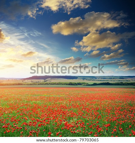 Big poppy meadow. Nature composition.