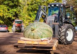 Big pumpkin with a tractor