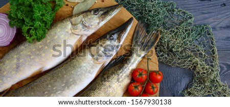 Big raw pikes with vegetables and herbs on a wooden tray. Fresh catch. Dietary product. Top view. Ready to cook. Banner #1567930138
