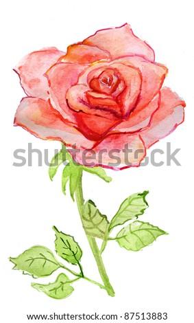 big red rose. watercolor