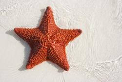 Big red starfish lying on the beach sand