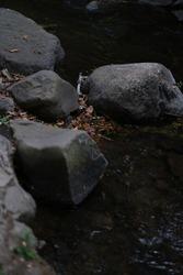 Big rocks on the riverbank