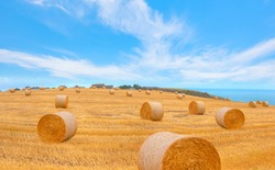 Big round bales of straw in the meadow - Harvested field with straw bales in summer